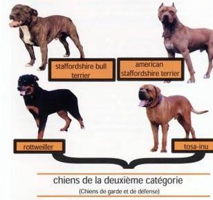 categorie chien